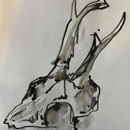 Drawing methods workshop - deer skull ink drawing by Amelia Oulton